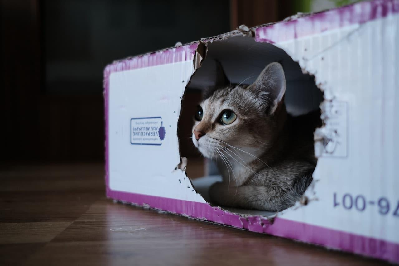 Comment organiser son déménagement avec un chat ou un chien ?